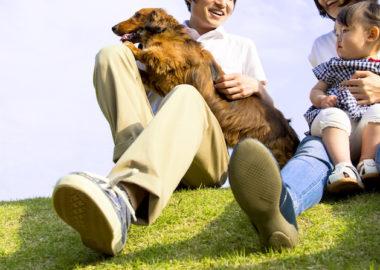 芝生でペットの犬と家族で楽しむ様子